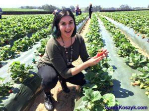8_Pick_Strawberries